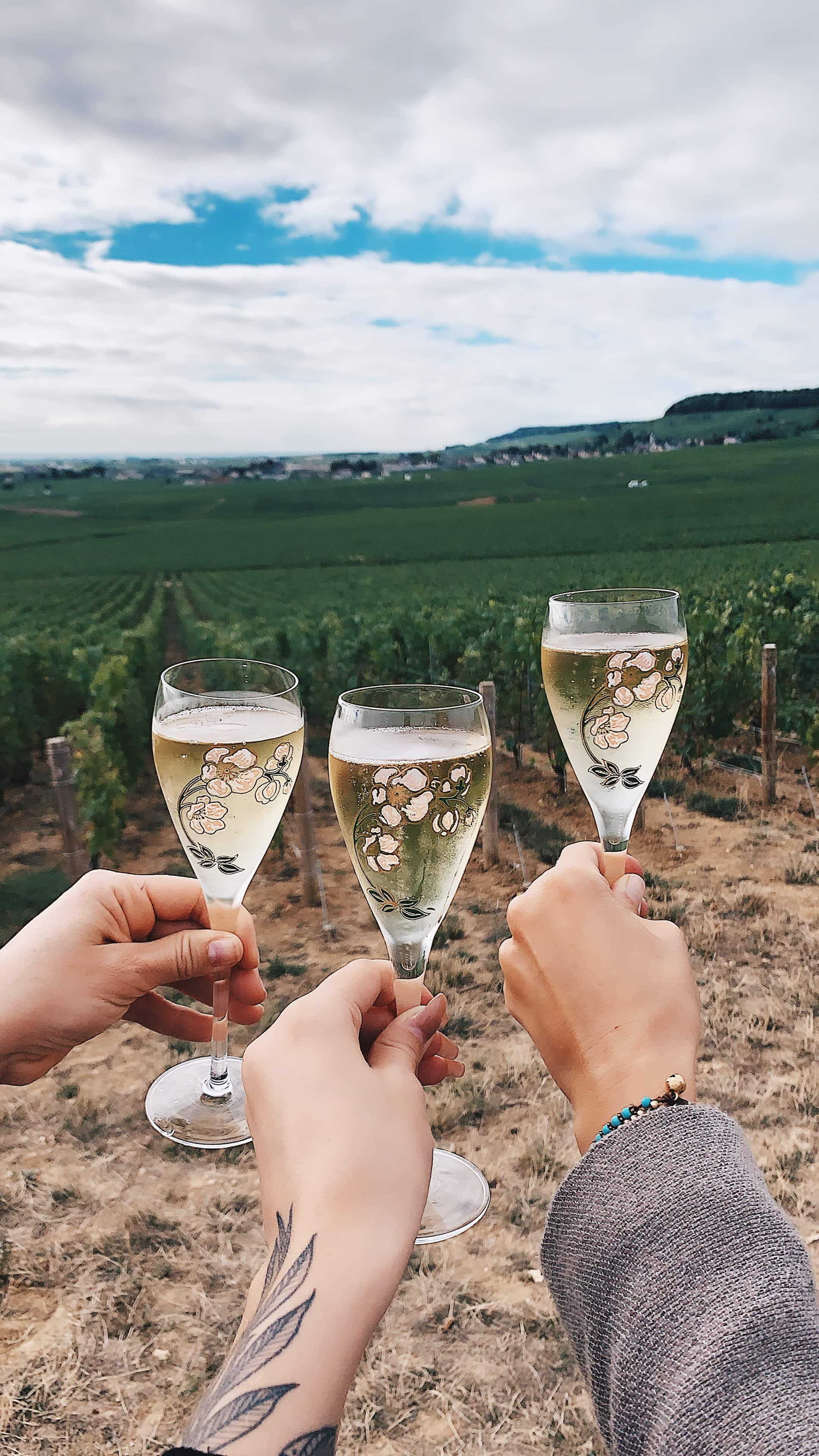 Perrier Jouet vineyards